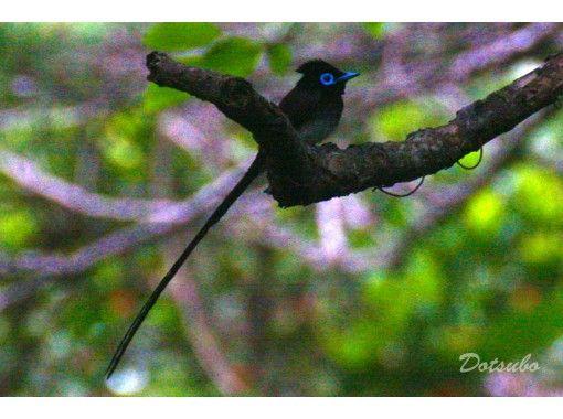 【慶良間・座間味島】オンライン野鳥観察ツアー。座間味で見られる野鳥 初級編!カラフルウェーブ  写真や動画を使用したツアーです。