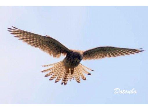 【慶良間・座間味島】オンライン野鳥観察ツアー。座間味で見られる野鳥 初級編!カラフルウェーブ  写真や動画を使用したツアーです。の紹介画像