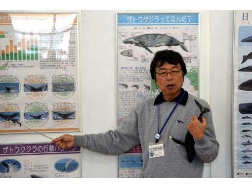 【慶良間諸島・座間味島】オンラインクジラガイドツアー くじら博士になろう!Vol.1初級編 事前に質問を承りますよ。写真や動画で配信します