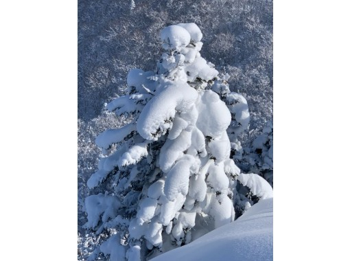 [北海道,小樽市]在朝里天狗岳的專業嚮導的雪鞋遠足<初學者行,有演講>の紹介画像