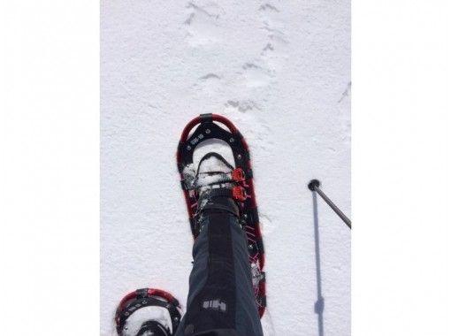 [北海道支Shi湖]莫斯走廊專業導遊陪同的未開發雪靴之旅<初學者可以,有演講>の紹介画像
