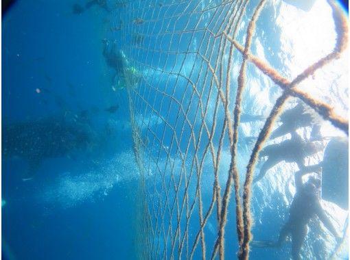 區域優惠券OK   [電暈措施卓越店面] [照片和動畫免費的! ]鯨鯊浮潛[巨大的力量!興奮的! ]の紹介画像