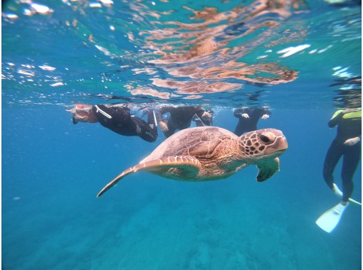 Let's swim with sea turtles in the Amami blue sea! ️ [Advance Course] Sea Game Swimの紹介画像