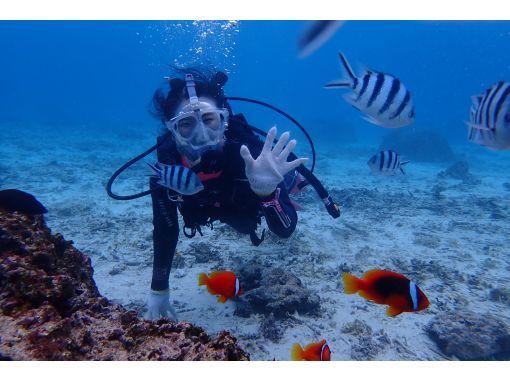 """[电晕措施的优秀商店! ] """"全面罩!蓝洞体验潜水""""含喂食和照片数据服务の紹介画像"""