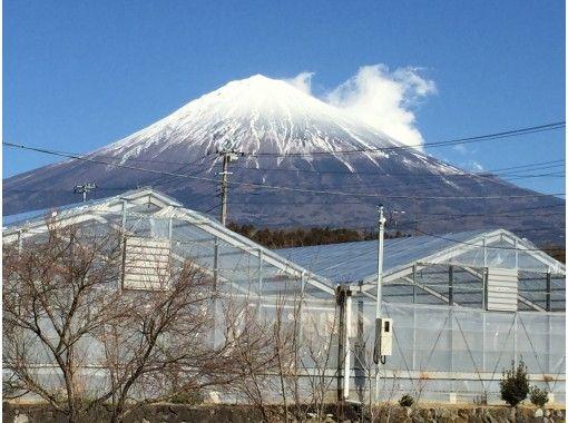 ★4月限定★富士山バギー自慢のロングコース1時間&富士山が1番大きく見えるいちご狩り園★いちご狩り30分食べ放題のコピーのコピーのコピー