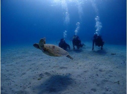 【屋久島 体験ダイビング 】1ダイブコース【午前・午後】
