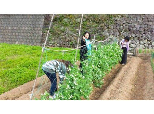 【佐賀・嬉野市】◆子牛さん(佐賀牛)へ餌やり体験 ◆野菜の収穫 ◆押し寿司作り(ファミリーにおすすめ)の紹介画像