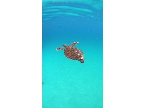 【鹿児島・屋久島】ウミガメに会いに行こう!シュノーケルツアー(半日コース)の紹介画像