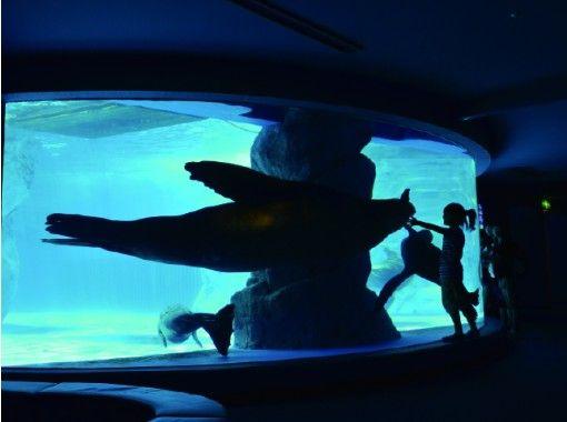 【オンラインツアー 】三重・鳥羽水族館 うら側探検隊「スナメリツアー」~ご自宅からオンラインで参加!~水族館の裏側をスタッフがご案内~の紹介画像
