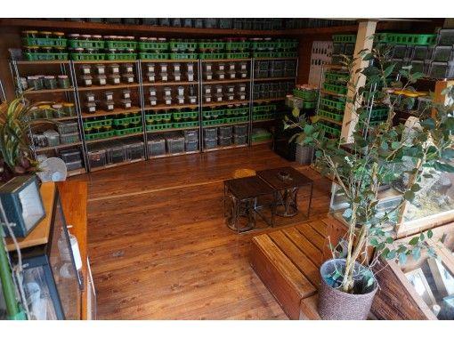 【広島県・府中市】超超超レアなカブトムシに出会い、木工品作りをして、築100年越えの町家に泊まる 親子で府中市満喫ツアー1泊2日