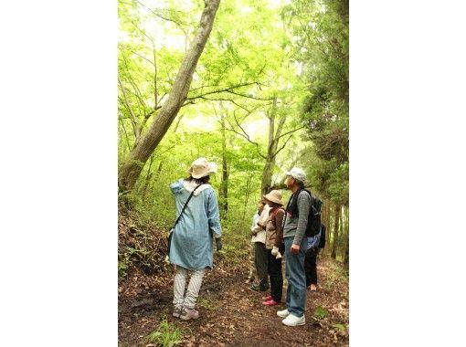 【広島・帝釈峡・神石高原】親子で、三世代で、森から学ぼう!ログハウスに泊まって森林セラピー体験 のびのび家族旅行1泊2日