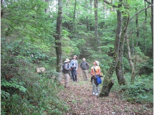 【広島・神石高原】標高700mの高原で森林セラピー体験 もみじのトンネルを歩こう! <ふれあいこもれびロード3.9km>