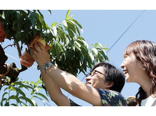 【岡山・赤磐】白桃狩り体験「試食2個」(40分)