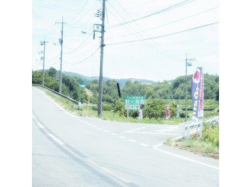 【Okayama・Akaiwa】 White Peach Picking Experience 「Sampling 2pcs」(40min)の紹介画像