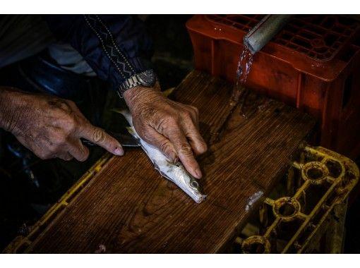 【徳島・小松島市】まるごと漁師体験! 漁船乗船、加工工場見学、魚市場「セリ」体験も!  購入した鮮魚は、地元料理店の特別ランチで堪能!