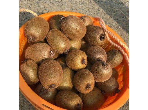 [Tokushima / Sanagochi Village] Enjoy the charm of kiwi! At a beautiful satoyama farm, you can experience harvesting and desserts!の紹介画像