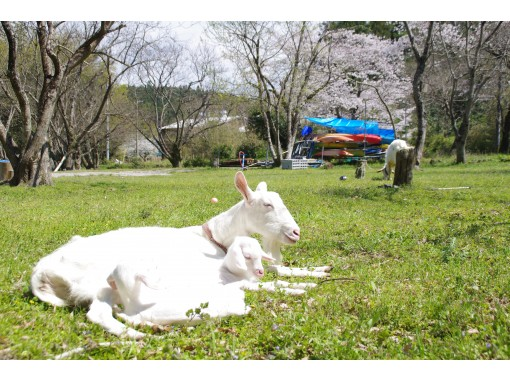 [Shikoku / Tokushima Family] [Regional common Use a coupon! ] Exciting! Making Baumkuchen with bambooの紹介画像