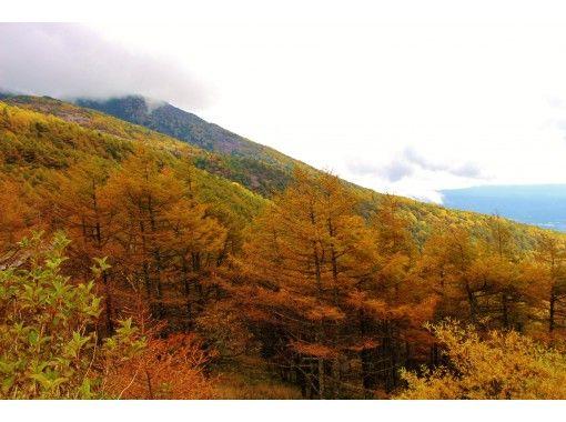 【長野・高峰高原】高峰高原で至福の自然体験を ≪秋≫カラマツ・草紅葉が彩る高峰散歩