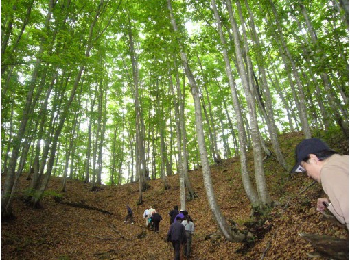 """[Yamagata Prefecture, Hijiori Onsen] """"Mini tour of rice terraces and beech forests in Yokkamura"""" Guided by a local guide ♪ Okura village enjoyment tour by bus \ Okura village of 100 selections of rice terraces in Japanの紹介画像"""