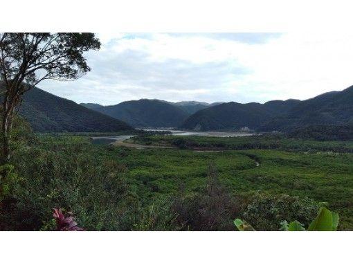 【鹿児島・奄美大島】世界自然遺産候補地マングローブ原生林でカヌー体験・見てびっくり巨大豆の木・マイナスイオン滝見学ツアー