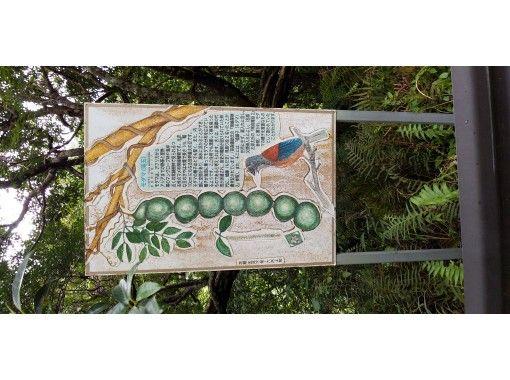 【鹿児島・奄美大島】世界自然遺産,マングローブ原生林でカヌー体験・見てびっくり巨大豆の木・マイナスイオン滝見学ツアーの紹介画像