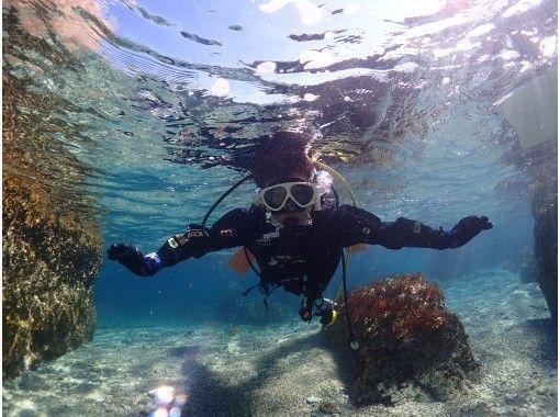 【和歌山・串本】カップルやグループにオススメ☆サンゴ礁が広がる本州最南端の海で体験ダイビング!の紹介画像