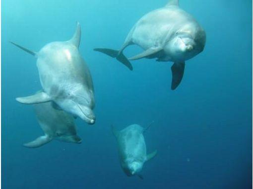 [Ogasawara, Chichijima islands around] Ogasawara to the beautiful sea of the world's, boat experience Diving!の紹介画像