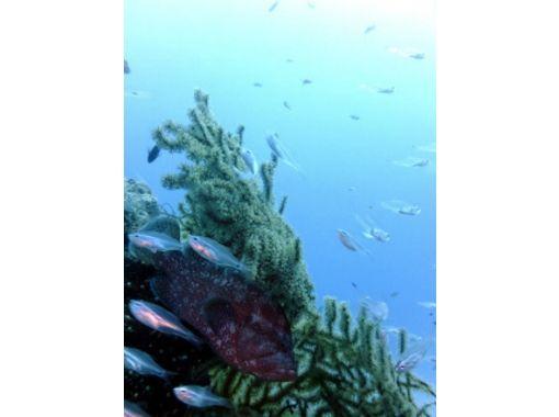 【沖縄・名護】ボートダイビングで、沖縄の海を心おきなく満喫!(1ボート)