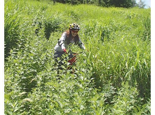 Morning activity !! [Nagano Prefecture, Kita Shirakaba Kogen (Shirakaba Lake, Kurumayama)] Early morning mountain bike experience A cool and refreshing early morning ride! It is completely reserved and safe ♪の紹介画像