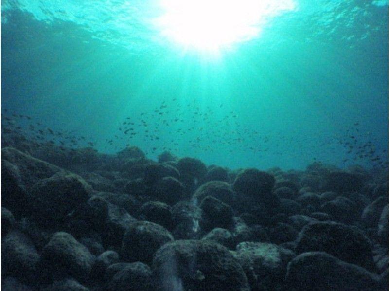 【静岡・伊豆海洋公園】ファンダイビング (2ビーチ)の紹介画像