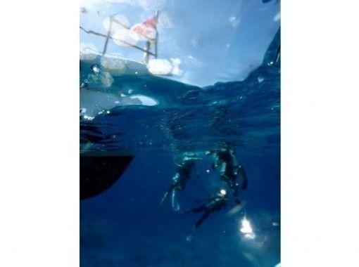 [Yamanashi Fuji Five Lakes, Lake Motosu] fan diving (2 Beach)の紹介画像