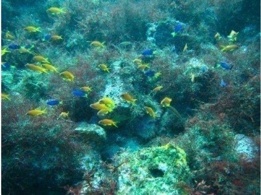 【 Kanagawa Odawara / Ishibashi / Enoshima / diving 】 Fun diving (2 beach)の紹介画像