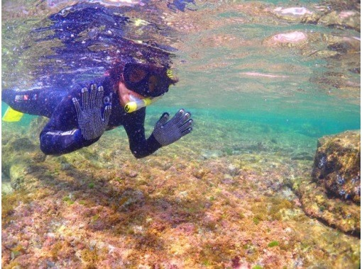 """Autumn sale in progress """"Snorkeling in the beautiful autumn sea"""" (Chiba / Moriya coast) Another world in the sea [Go To dealer] ◆ First-timers can rest assuredの紹介画像"""