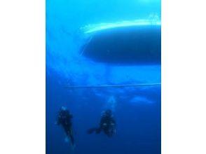 ミスオーシャン ダイビングサービスの画像