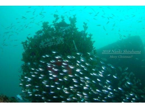 [Wakayama / Shirahama] campaign price! Active diver support plan (2 Botodaibu)の紹介画像