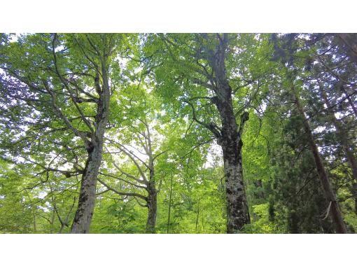 【2021立山黒部オンラインツアー】立山黒部アルペンルート 立山杉とブナに抱かれる旅の紹介画像
