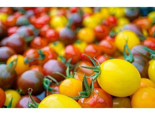 "[Fukushima / Iwaki City] Tomato picking and harvesting experience of up to 5 types at the tomato theme park ""Wonder Farm""の紹介画像"