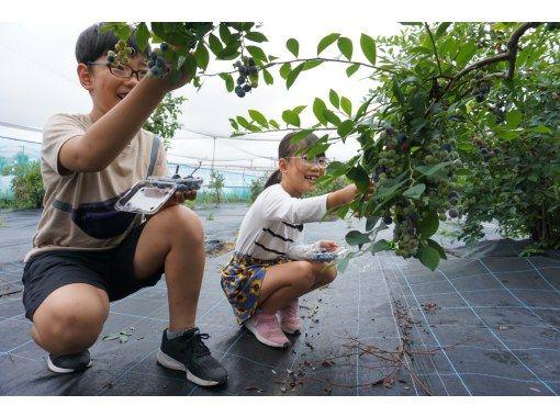 【和歌山・海南市】新鮮なブルーベリー摘みとり体験~ファミリー・女性におすすめ!ブルーベリー250gお土産付きの紹介画像