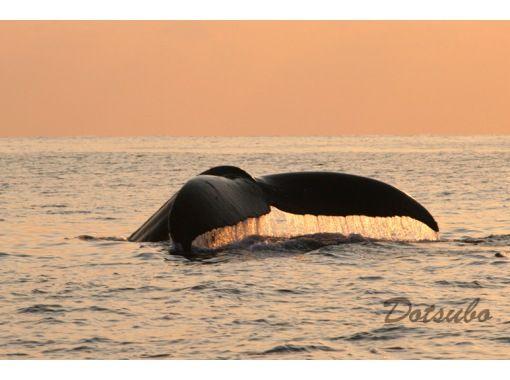 【夏休みの自由研究に!】小学校3~6年生向け。オンライン講座『くじら博士になろう!』沖縄・座間味 クジラの事を知りたい人この指と~まれ✌の紹介画像