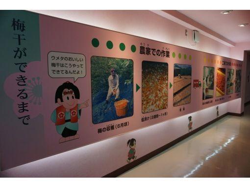 【和歌山・みなべ町】マイ梅干し作り体験~世界にひとつだけの梅干しをつくりませんか?の紹介画像