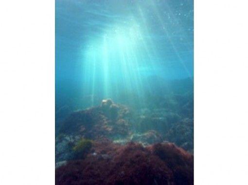 [靜岡伊藤Jogasaki埠頭伊豆海洋公園Yawatano]隨便享受大海!跳水の紹介画像