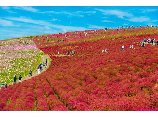 [From Tokyo] 120 minutes of Mokomoko Kokia in Hitachi Seaside Park and 150 minutes of Ami Premium Outlets ★ Ibaraki Enjoy Day Trip Bus Tour DBA4の紹介画像