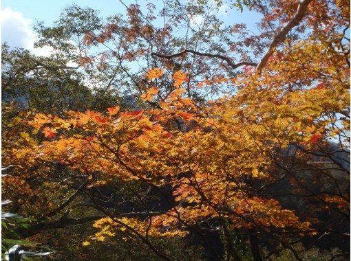 【北海道・層雲峡】プロガイドと行く大雪高原温泉沼めぐり 紅葉トレッキングツアーの紹介画像