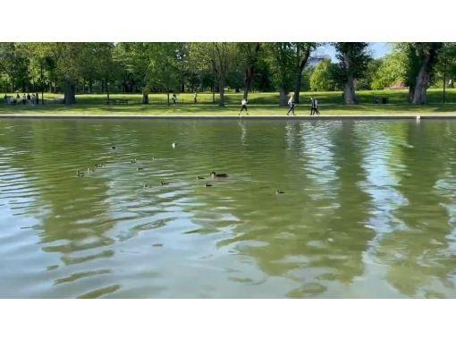 [Virtual Tour] Washington DC Cherry Blossom & Greenery Walkの紹介画像