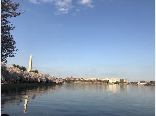 [Virtual Tour] Washington DC x Tokyo, Cherry Blossom Walkの紹介画像