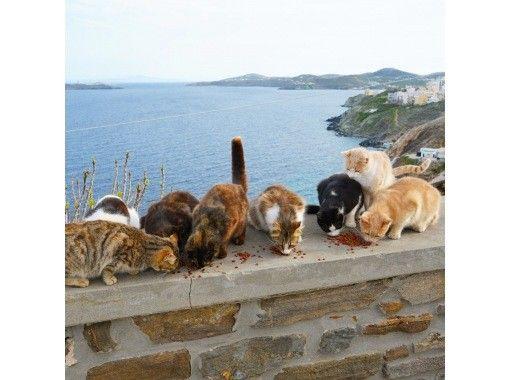 【キッズオンライン旅行体験】貸切りギリシャグループツアーの紹介画像