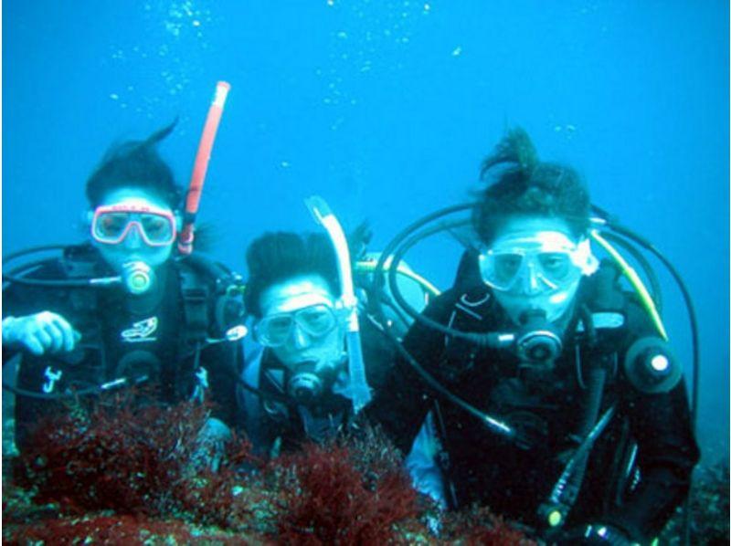 【静岡・伊東 伊豆海洋公園】ゆったり充実の体験ダイビングの紹介画像