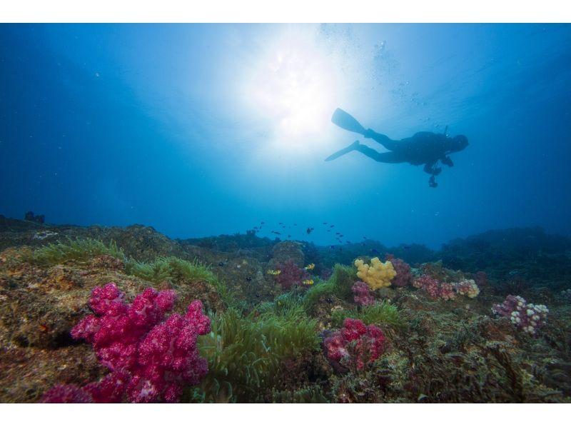 【徳島・日和佐】体験ダイビング(ビーチポイント)の紹介画像