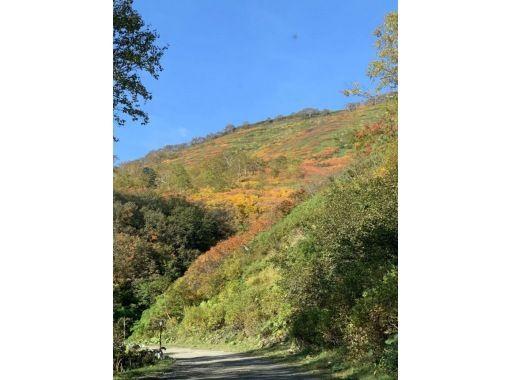 【北海道・層雲峡】プロガイドと行く赤岳・駒草平 紅葉トレッキングツアーの紹介画像