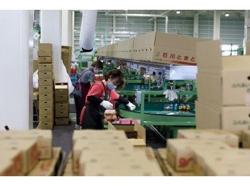 【石川・小松市】大量のトマトを瞬時に選別!最新鋭の選果システム見学の紹介画像